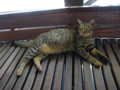 Cats of Houtong, #4483