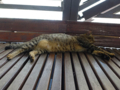 Cats of Houtong, #4484