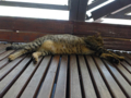 Cats of Houtong, #4485