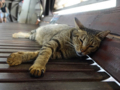Cats of Houtong, #4486