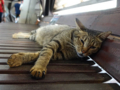 Cats of Houtong, #4487