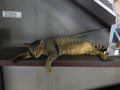 Cats of Houtong, #4493