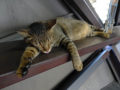 Cats of Houtong, #4495