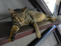 Cats of Houtong, #4497