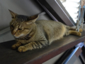 Cats of Houtong, #4498