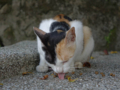 Cats of Houtong, #4499