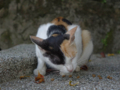 Cats of Houtong, #4500