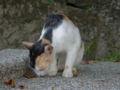 Cats of Houtong, #4502