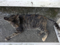 Cats of Houtong, #4503