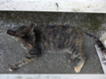 Cats of Houtong, #4504