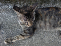 Cats of Houtong, #4506