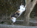 Cats of Houtong, #4507