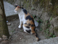 Cats of Houtong, #4508