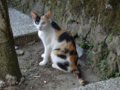 Cats of Houtong, #4509