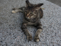 Cats of Houtong, #4510