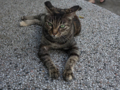 Cats of Houtong, #4511