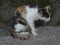 Cats of Houtong, #4512