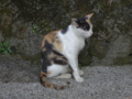Cats of Houtong, #4514