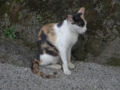 Cats of Houtong, #4515
