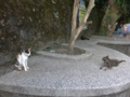Cats of Houtong, #4520