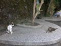 Cats of Houtong, #4521