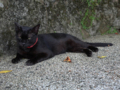 Cats of Houtong, #4524