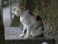 Cats of Houtong, #4526