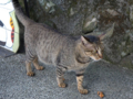 Cats of Houtong, #4527