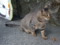 Cats of Houtong, #4528