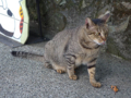 Cats of Houtong, #4530