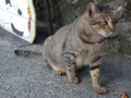 Cats of Houtong, #4531