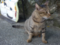 Cats of Houtong, #4532