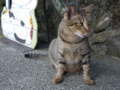 Cats of Houtong, #4533