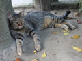 Cats of Houtong, #4534