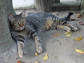 Cats of Houtong, #4535
