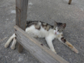 Cats of Houtong, #4536