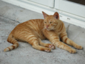 Cats of Houtong, #4538