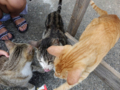 Cats of Houtong, #4540