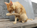 Cats of Houtong, #4541