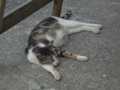 Cats of Houtong, #4547