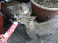 Cats of Houtong, #4548