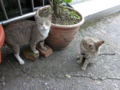 Cats of Houtong, #4552