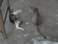 Cats of Houtong, #4555
