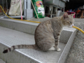 Cats of Houtong, #4567