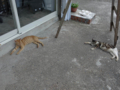 Cats of Houtong, #4578