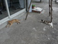 Cats of Houtong, #4579