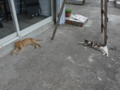 Cats of Houtong, #4580
