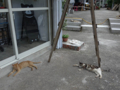 Cats of Houtong, #4581