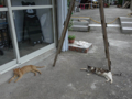 Cats of Houtong, #4582