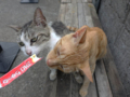 Cats of Houtong, #4584